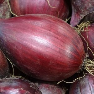 oignon rouge ferme de gourhert vente directe ploermel ferme de gourhert vente directe ploermel