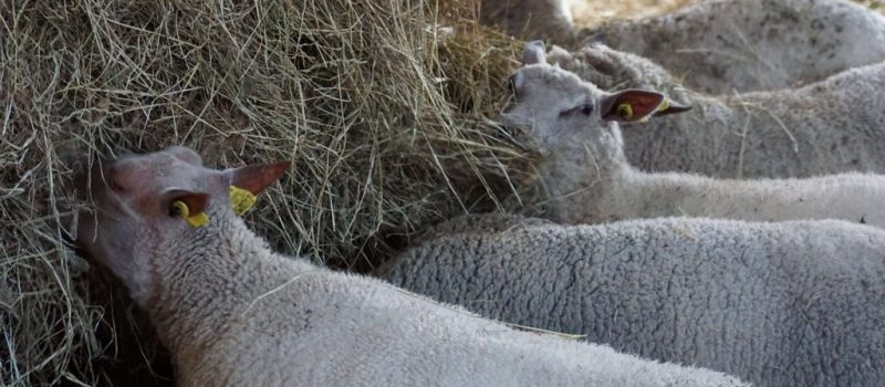 ferme de gourhert vente en direct morbihan courges 1